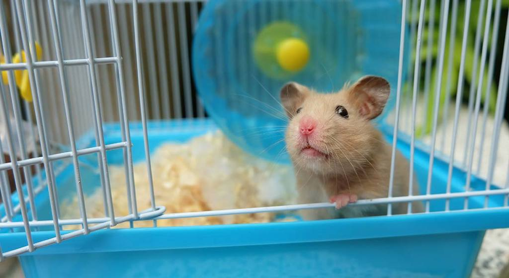 Accessoires-Hamster