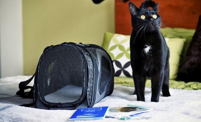 Voyager a l'etranger avec son chat les demarches
