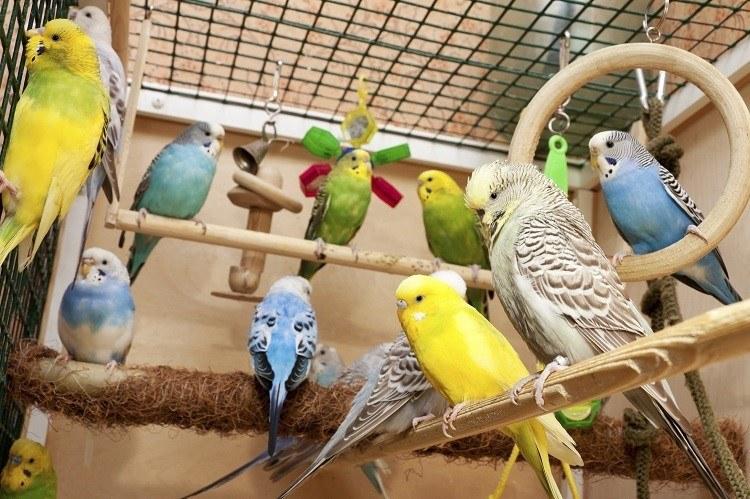 Comment choisir son oiseau de compagnie