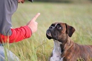 Comment-dresser-un-chien