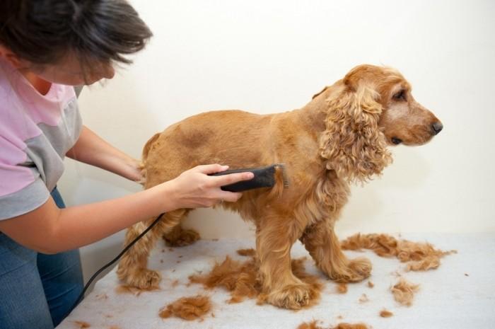tondeuse-chien-comment-utiliser