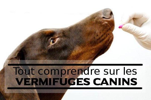 vermifuge-pour-chien-guide