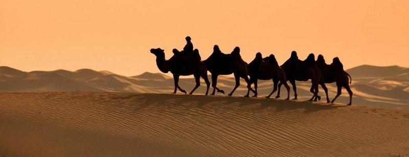 acheter un chameau