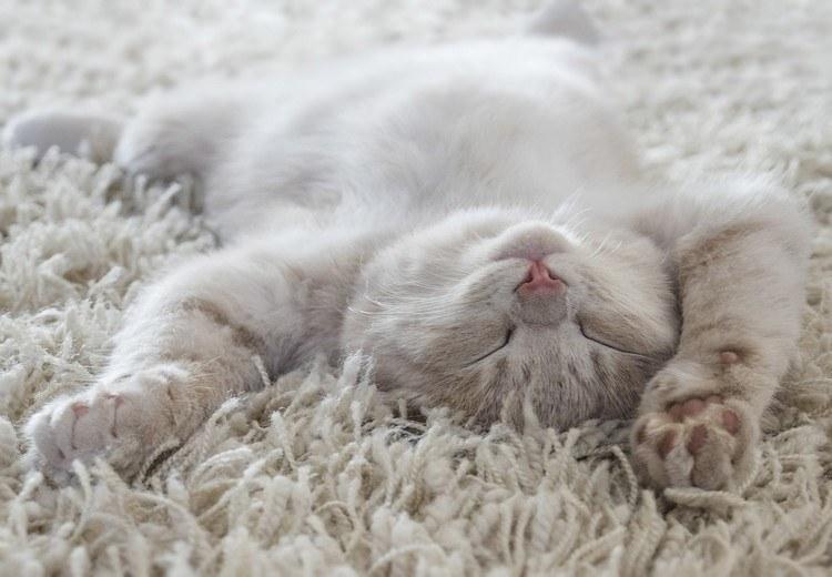 aider un chat a dormir a l'heure du coucher