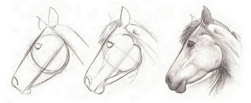 comment dessiner un collier pour chien