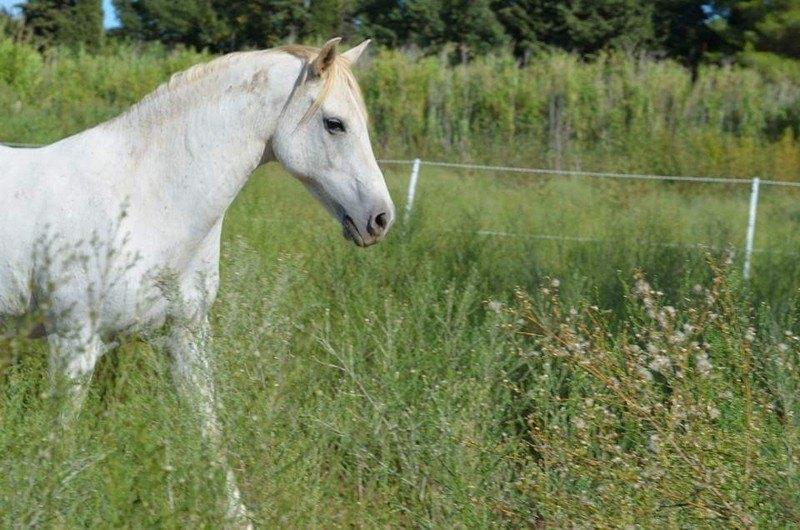 comment s'occuper d'un cheval