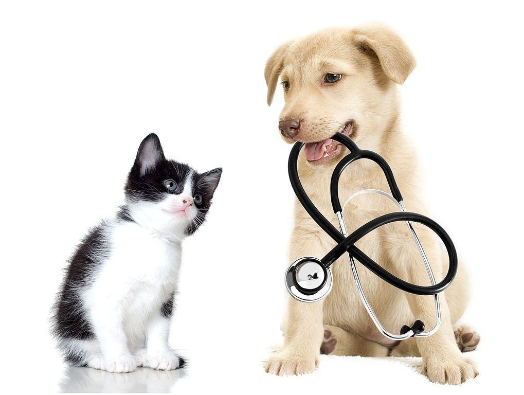 devenir un vétérinaire