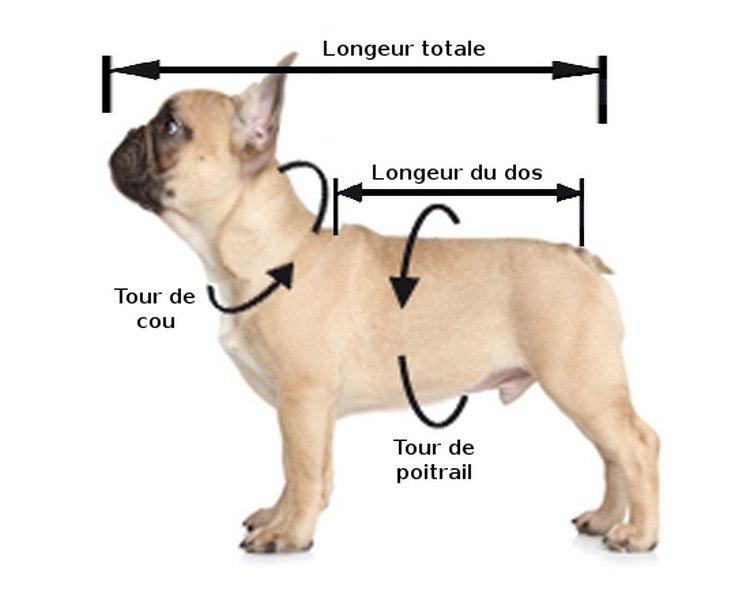 mesurer son chien pour harnais ou laisse