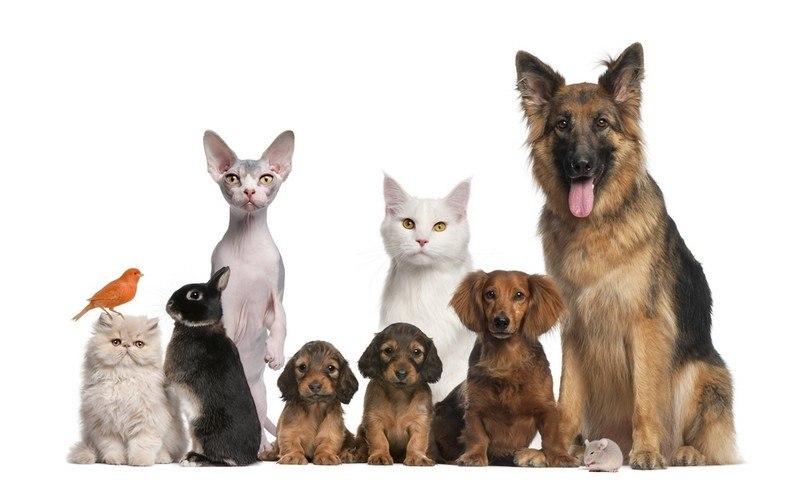 nom animaux de compagnie