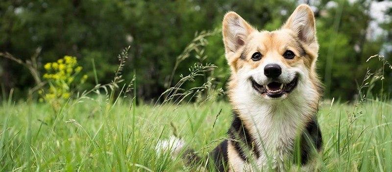 savoir si mon chien est heureux