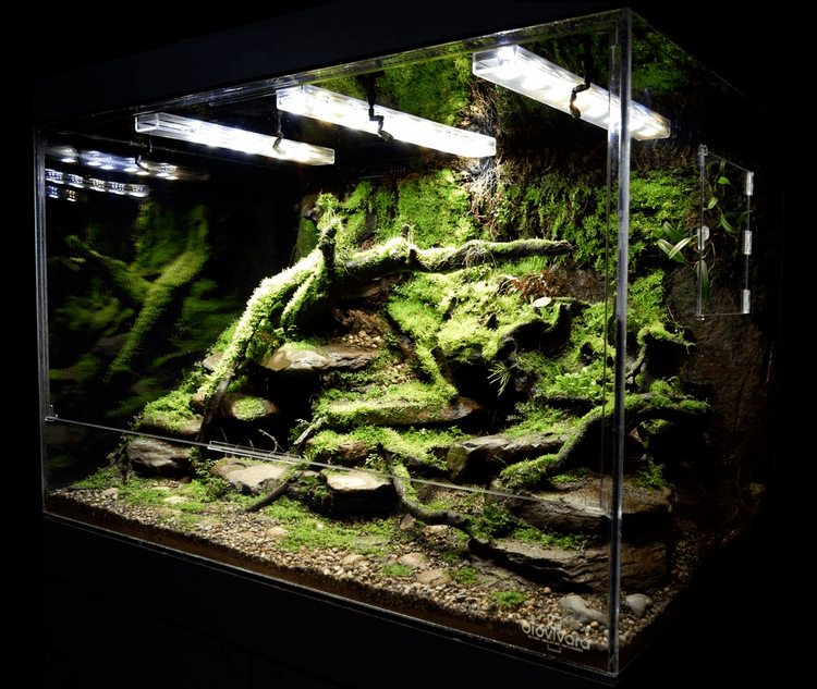 Comment Faire un Vivarium