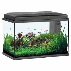 Aquarium Aquastart 55 Led Noir