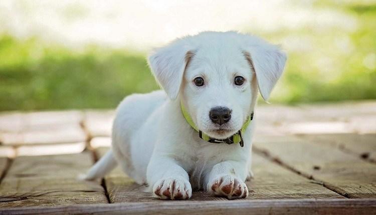 choisir medaille chien