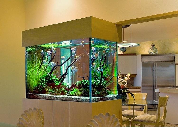 entretien aquarium