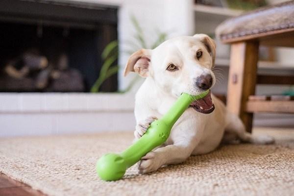 jouet baton chien