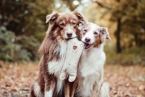 jouet couineur chien