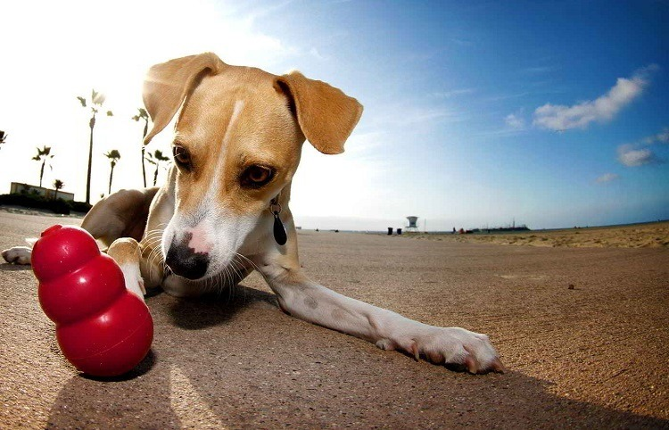 meilleur jouet pour chien