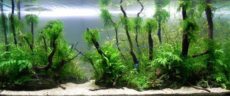 nettoyer aquarium