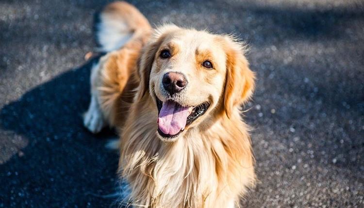 personnaliser medaille chien
