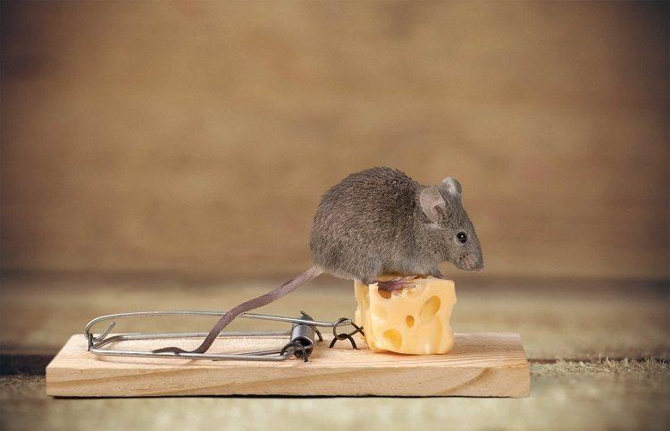 piege a rat piege a souris