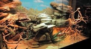 terrarium désertique